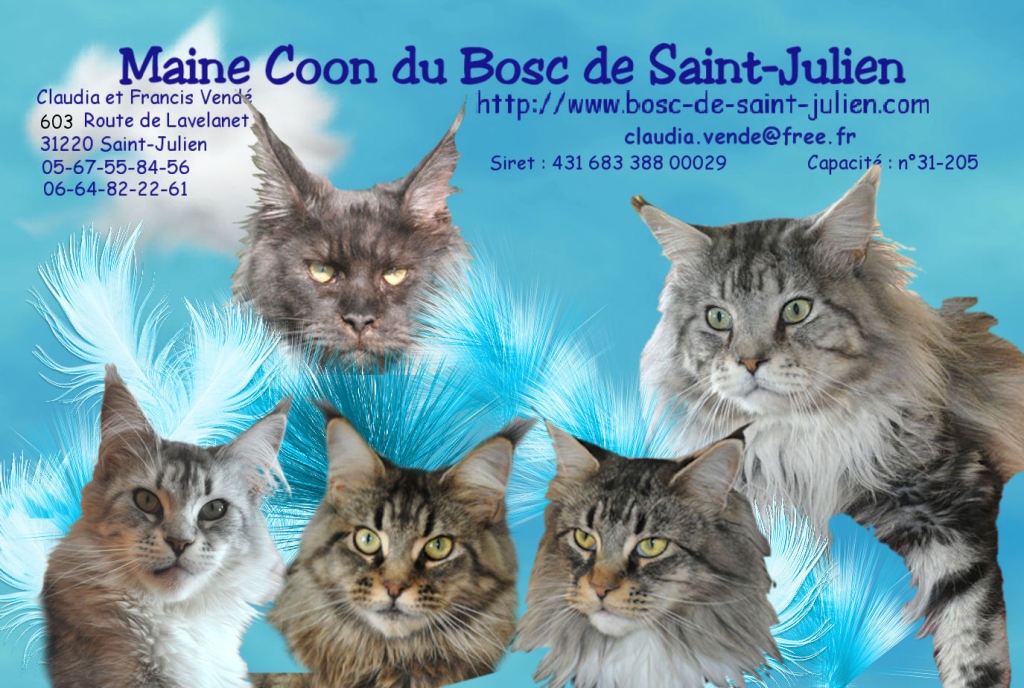 Chatterie du Bosc de Saint-Julien - Élevage de chats - Saint-Julien-sur-Garonne
