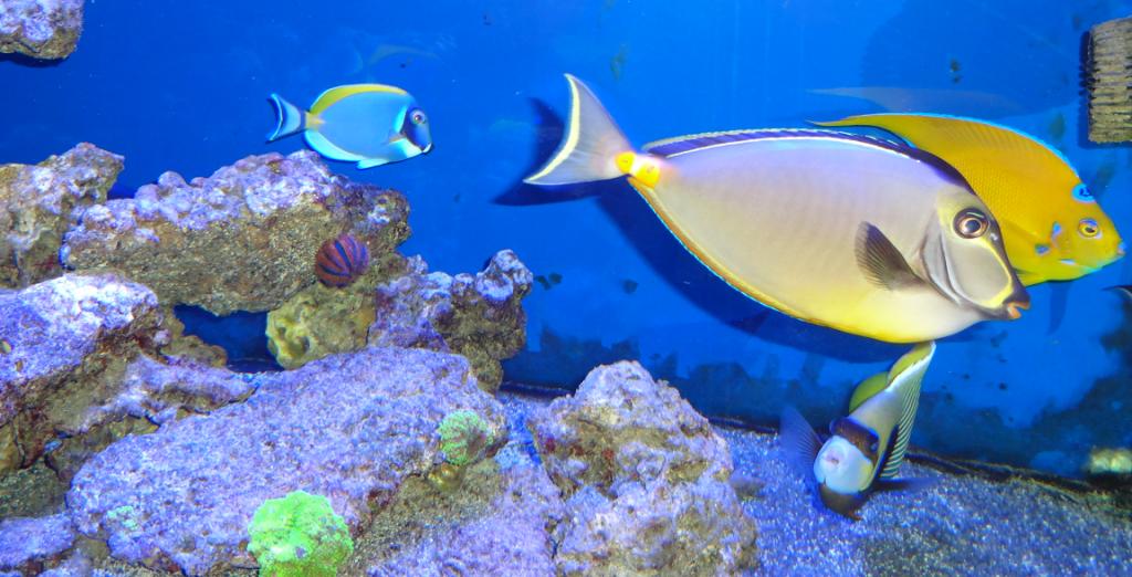 aix aquarium animalerie 20 route galice 13080 aix en provence adresse horaire. Black Bedroom Furniture Sets. Home Design Ideas