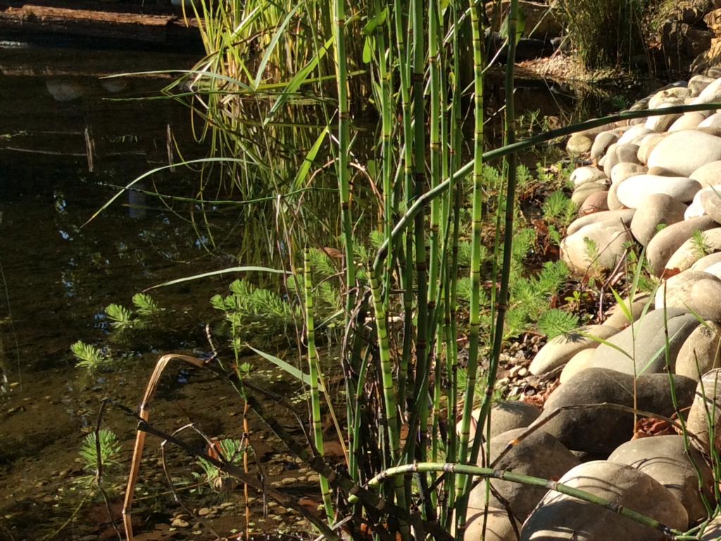 bassin aquatique 25 larnod - paysagiste (adresse, avis)