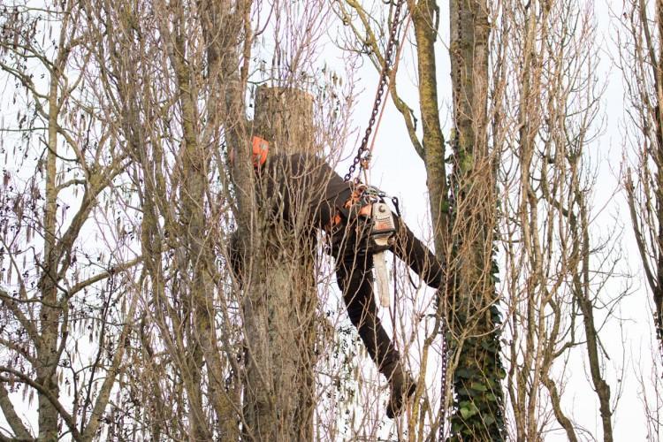 abattage arbre la rochelle