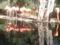 Zoa Parc Animalier Et Exotique Sanary Sur Mer Zoo Adresse Avis