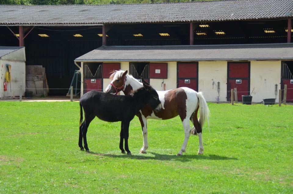 centre equestre montreuil en touraine