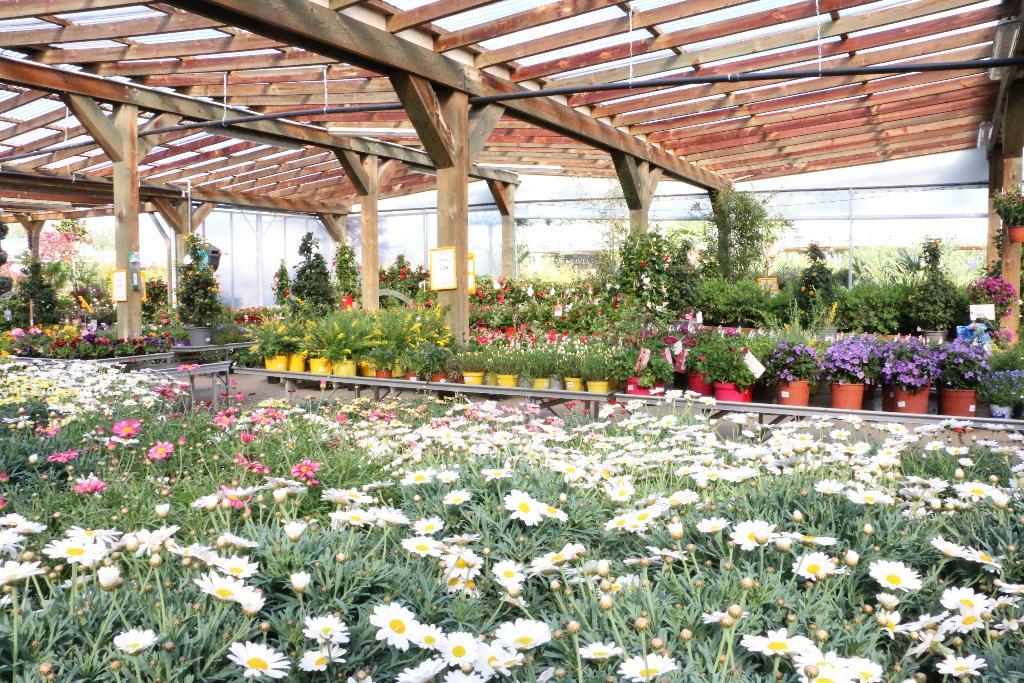 Les jardins des monts d 39 or jardinerie route nationale 6 69760 limonest adresse horaire - Les jardins des monts d or ...