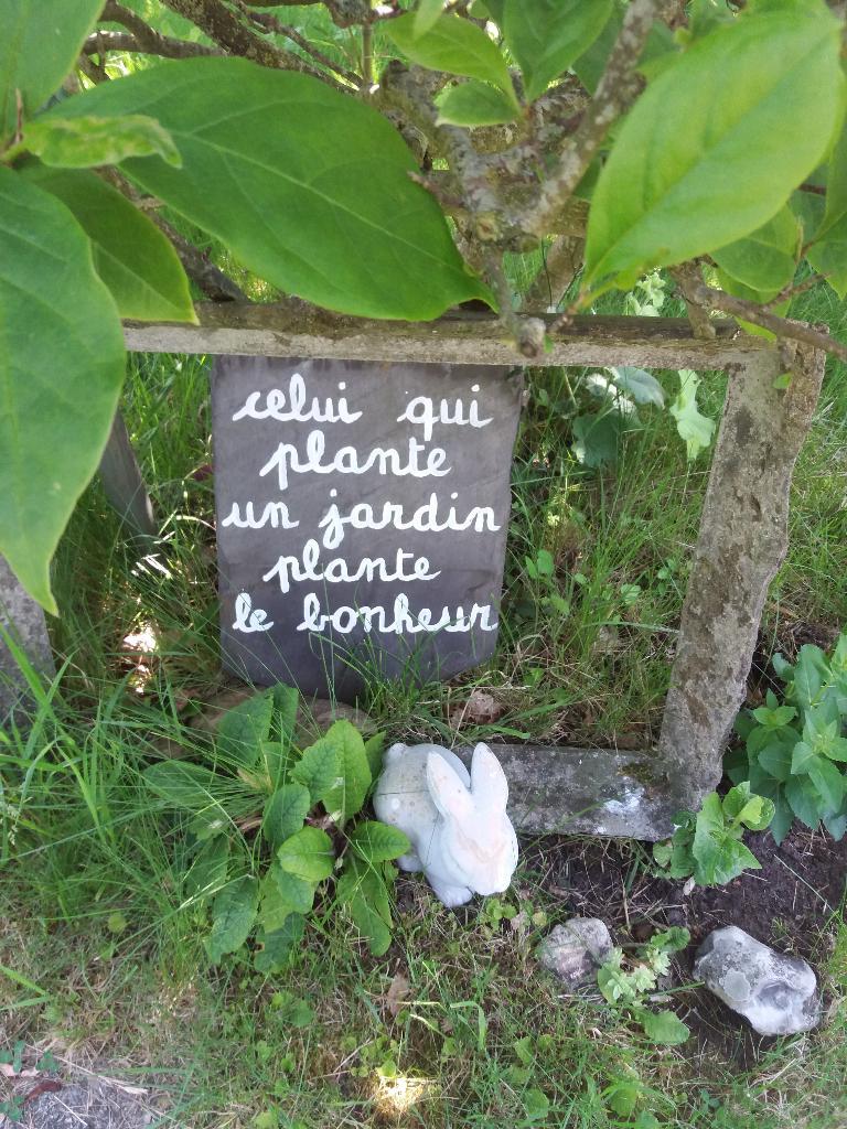 Les Plantes De L\'olivier Wierre Effroy - Jardinerie (adresse ...